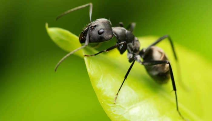 The Ultimate Guide to Getting Rid of Sweet Ants