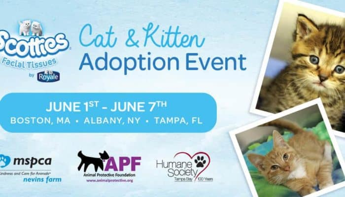 Scotties 2017 Cat & Kitten Adoption Event