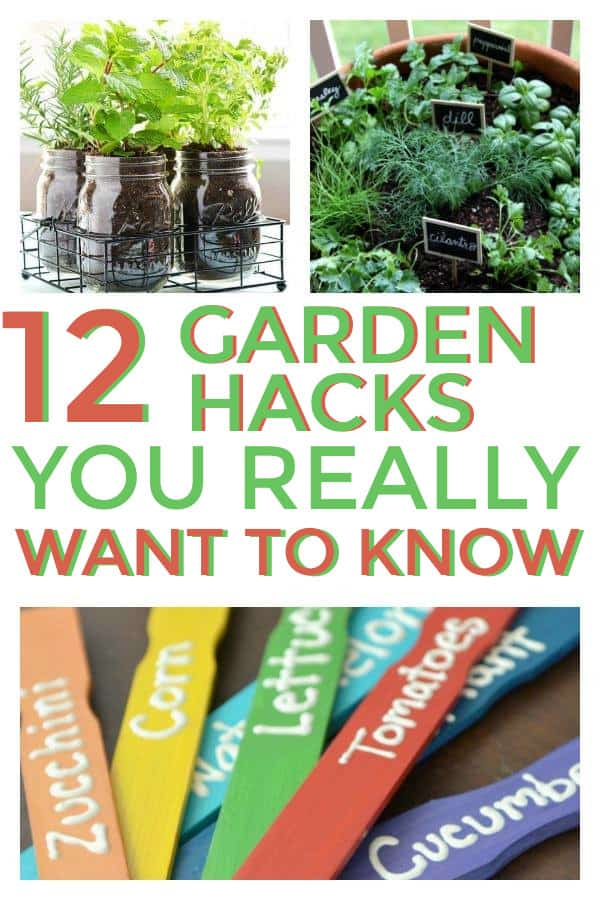 DIY Gardening hacks and tips that would be great for beginners and experienced gardeners. #gardenhacks #garden #gardentips