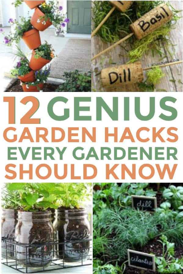 DIY Garden tips that are cheap and easy. Many of these beginners can do. #gardening #gardeninghacks #garden #gardeninghacks #diygardening